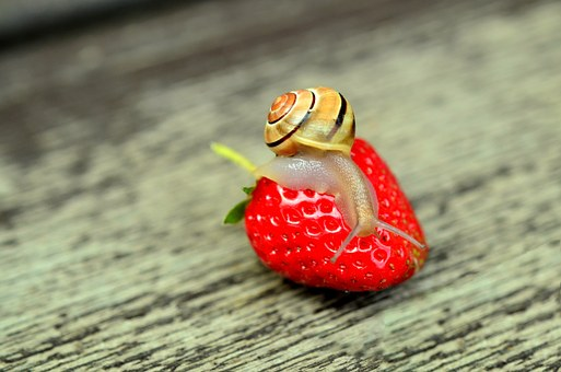 strawberry-799597__340.jpg